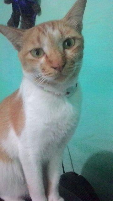 Pilar News Mengenal Kucing Jenis Jenisnya Pilar News